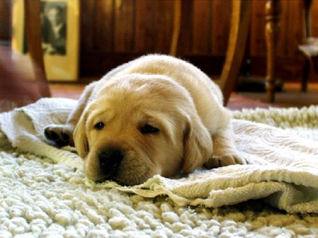 We Will Remove Pet Orders in Carpet in Huntington Beach CA, we get out urine stains to